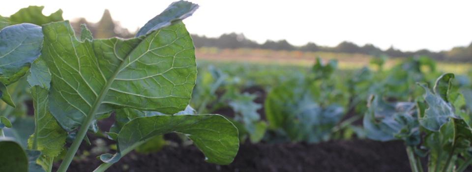 千葉県成田 無農薬野菜の宅配 あるまま農園